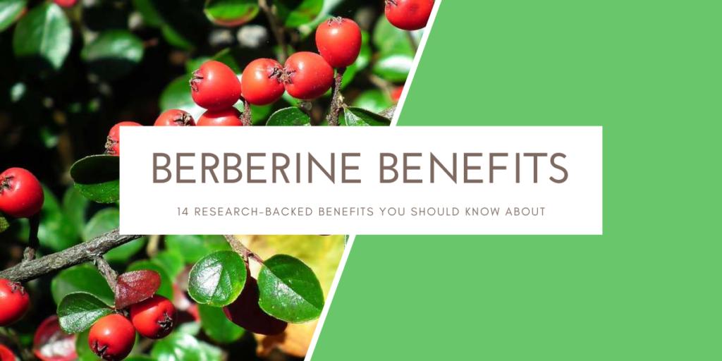 berberine benefits