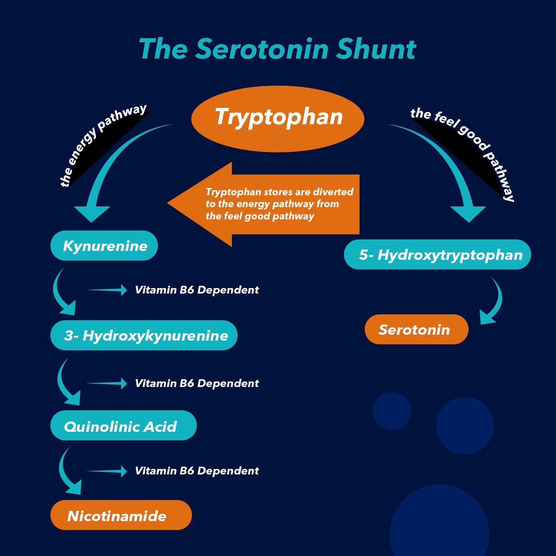 stress reduces the production of serotonin