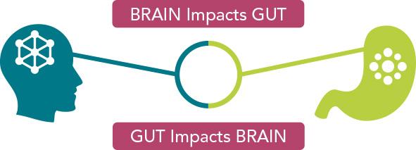 how brain impacts gut chart