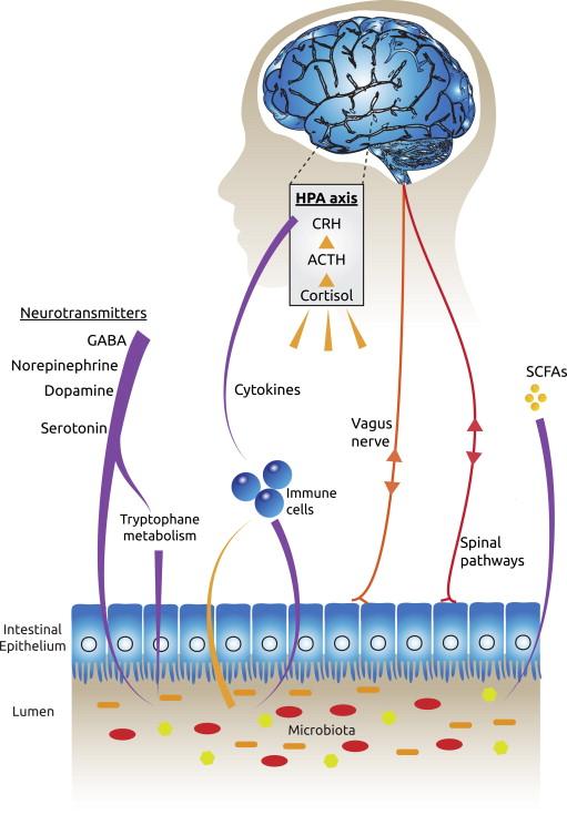 probiotics depression anxiety chart